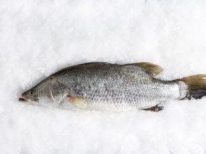 ปลากะพงออร์แกนิค